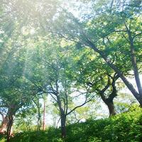 群馬県を中心に関東で使用されている材木業に特化した販売管理ソフト『木想店凱』の紹介です。